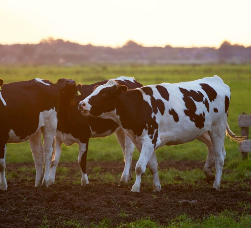 agriculture-animal-animal-photography-blur-422218